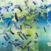 Natuur vertaald 18 (2016) mixed media op doek, 20 x 20 cm (particuliere collectie).