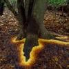 goldsworthy-leaves